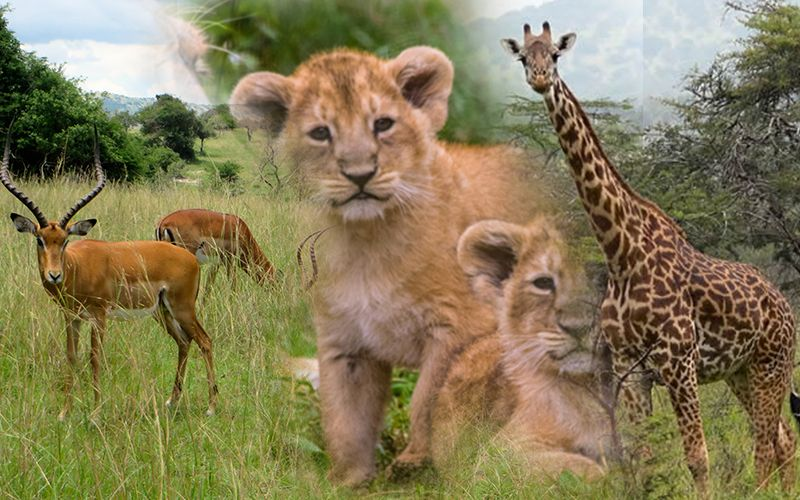 2 Days Akagera Wildlife Safari