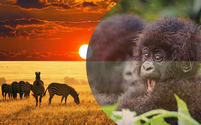 Adventure Rwanda Experience Safari