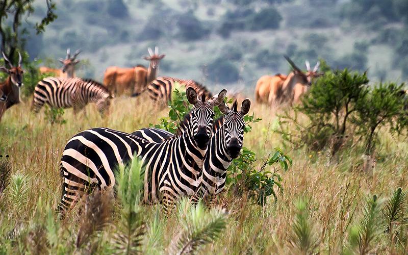 Akagera wildlife Safari