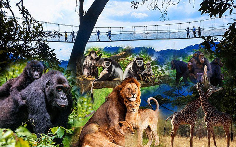 12 days Rwanda Safaris Experience