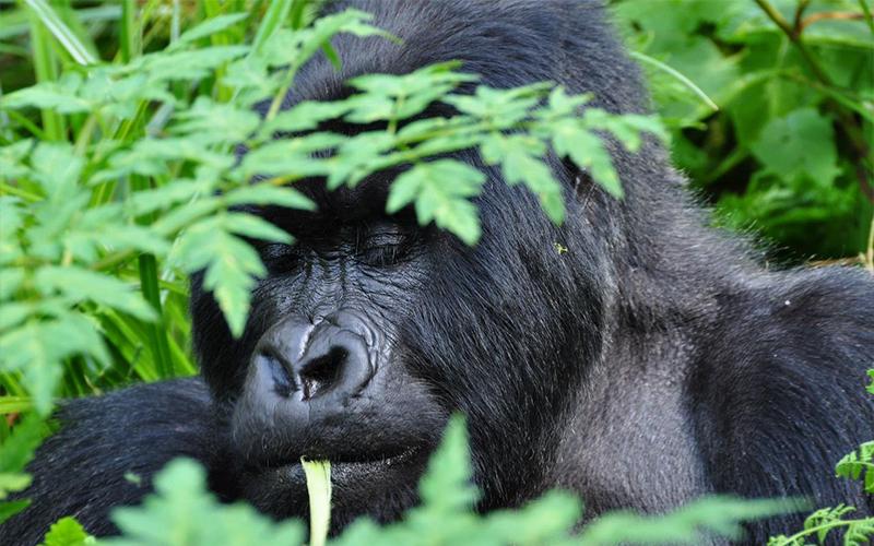 6 days Rwanda Primates Trekking Safari