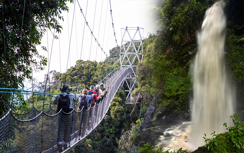 1 Day Nyungwe Canopy walk Adventure/Waterfalls