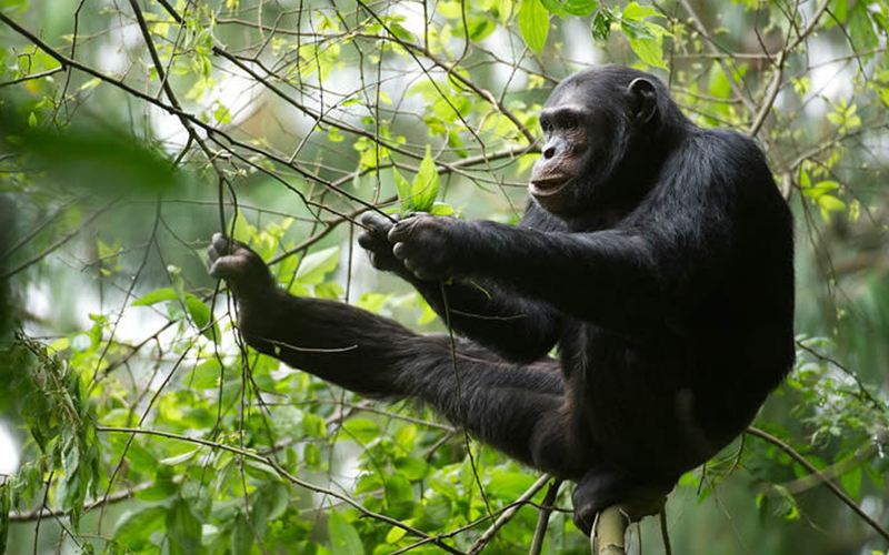 3 days Nyungwe Primates Trekking Tour
